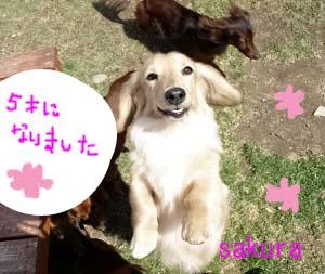 さくら笑顔bのコピー.jpg